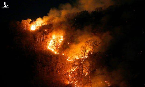 Cháy rừng ở Amazon là mất mát nghiêm trọng về môi trường.