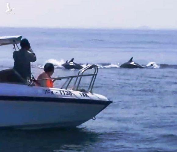 Đàn cá heo cả trăm con xuất hiện trên biển Cù Lao Chàm nô đùa với du khách vào ngày 4.10 /// ẢNH: CẮT TỪ CLIP