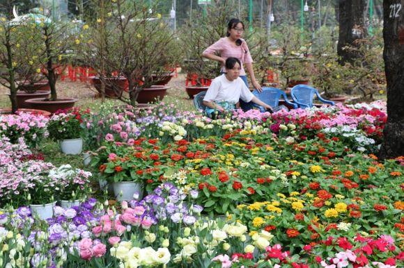 Người trẻ nô nức du xuân, ngắm hoa tết Sài Gòn - ảnh 21