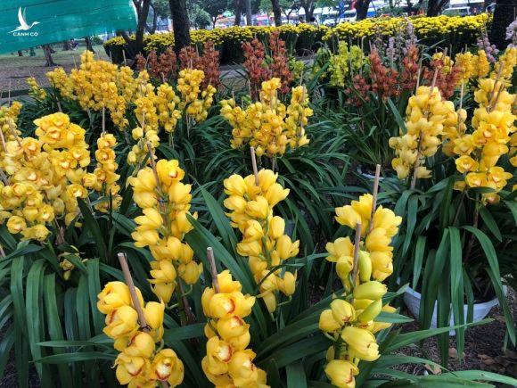 Người trẻ nô nức du xuân, ngắm hoa tết Sài Gòn - ảnh 13