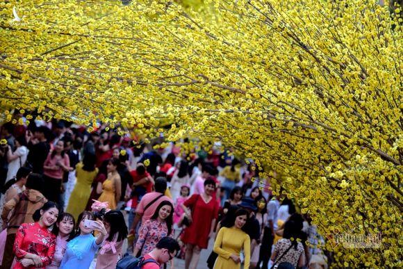 Con đường hoa mai rực rỡ sắc xuân ở Sài Gòn