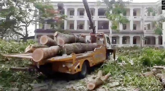 Chặt cây cổ thụ đang tươi tốt, trường học ở Nghệ An bị kiểm điểm