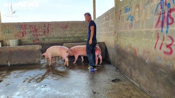 Hàng nghìn con lợn sống được nhập về, giá lợn hơi liên tiếp giảm mạnh - 1