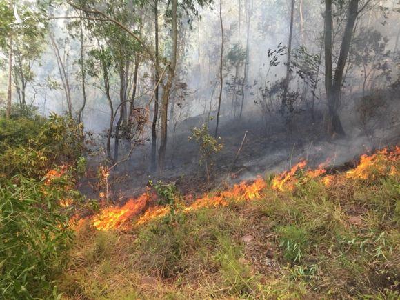 Người phụ nữ đốt rác rồi bỏ vào nhà, không ngờ lửa lan cháy cả cánh rừng - Ảnh 1.