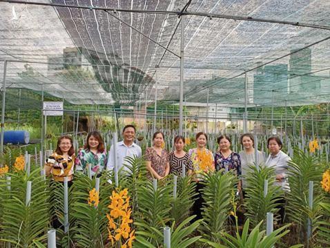Mô hình trồng hoa lan Mokara của nông dân quận Thủ Đức, Tp HCM.