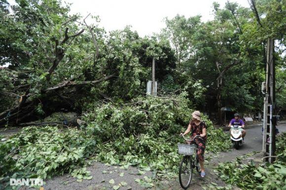 Vì sao hàng trăm cột điện tại Thừa Thiên Huế gãy đổ trong bão số 5? - 6