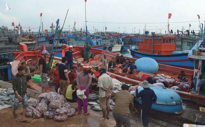 Tàu xuyên tết đầy cá, mực từ Hoàng Sa, Trường Sa1