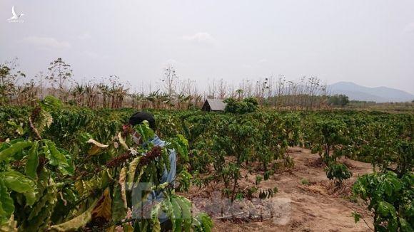 Hơn 22 nghìn ha rừng ở Đắk Lắk bị xóa sổ như thế nào? - ảnh 1
