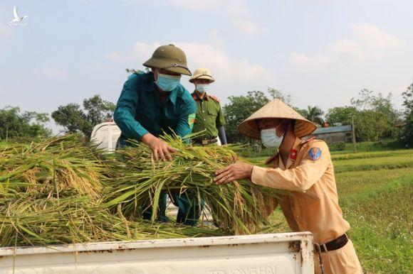 Công an xuống xã lội ruộng gặt lúa giúp các F1, F2 đang phải cách ly - Ảnh 6.