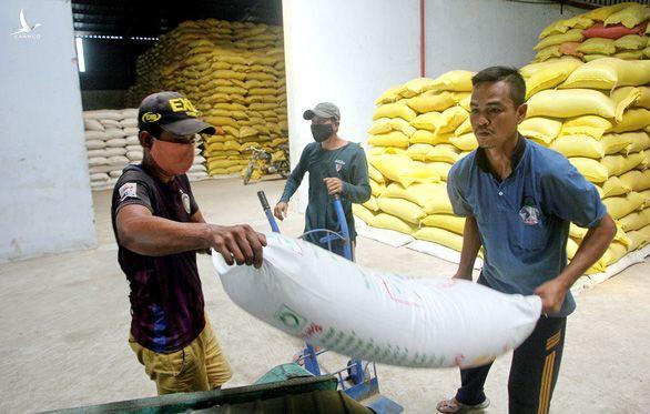 Công nhân đưa lúa ST24 đi chế biến tại nhà máy của ông Hồ Quang Cua tại thị trấn Mỹ Xuyên (huyện Mỹ Xuyên, Sóc Trăng)