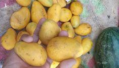 Cả trăm tấn trái cây Trung Quốc đổ bộ TP HCM gắn mác hàng Châu Đốc