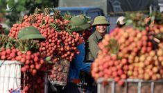 Trung Quốc thay đổi, Mỹ khó lường và Việt Nam rơi vào vòng xoáy