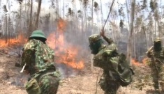 Hàng trăm cán bộ, chiến sĩ tham gia chữa cháy 50 ha rừng Phú Yên