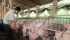 Trung Quốc quyết cắt nguồn Mỹ, sang Việt Nam lùng mua gom hàng