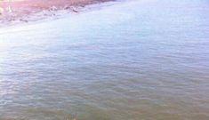 Sau lũ, dân Hà Tĩnh hoảng hồn phát hiện cá sấu lớn như thùng sơn bơi trên sông