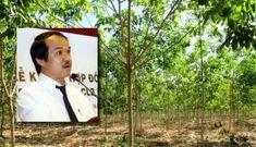 1.500 ha trái cây của bầu Đức tại Lào bị ngập lụt