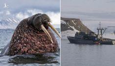 Giật mình về thủ phạm đâm chìm tàu hải quân Nga