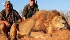 """""""Nên hợp pháp săn thú hoang dã"""" – tưởng vô lý nhưng lại cực kỳ đáng suy ngẫm"""