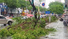 Chỉ ảnh hưởng bão, nhưng cây xanh ở Đà Nẵng đã ngã đổ tràn lan: Tiết lộ sốc