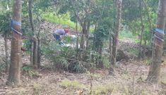 Lộ danh tính nạn nhân vụ thi thể không đầu trong bụi rậm ở Bình Phước