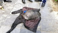 """Rùa Hồ Gươm bị câu trộm liệu có phải """"hậu duệ cụ rùa"""" không?"""
