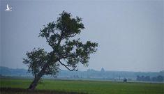 Đẹp nao lòng trước khoảnh khắc yên bình của làng quê Việt