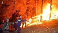 Phạt tù người gây cháy 168 ha rừng ở Phú Yên