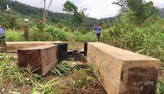 35 cán bộ Sở NN-PTNT tỉnh Gia Lai bị kỷ luật vì để xảy ra phá rừng