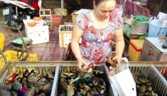 Lại đến cua biển, mít Thái, thanh long, dưa hấu  rớt giá, ế thê thảm