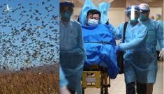 400 tỷ con châu chấu sắp trở thành đại kiếp của Trung Quốc