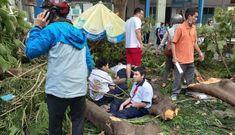 Vụ cây phượng đổ đè chết học sinh: Còn đó nỗi lo…
