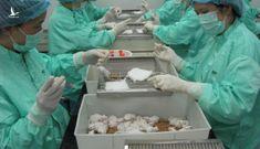 Chuột thí nghiệm khỏe mạnh – triển vọng vaccine Covid-19 ở Việt Nam