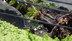 Đơn vị nào chịu trách nhiệm quản lý cây xanh trong trường học ?