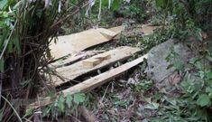 Thủ tướng yêu cầu xử lý nghiêm hoạt động phá rừng tại Kon Tum