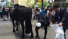 Ngựa tây – Ngựa ta: Đẹp mã & thực chiến hay lại là phương tây luôn là hình mẫu