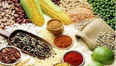 Chính Phủ xuất cấp hạt giống cây trồng hỗ trợ các tỉnh Sơn La và Thừa Thiên Huế