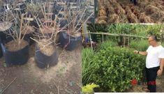 """9X """"hô biến"""" loài cây mọc hoang thành đặc sản, bán gần triệu đồng mỗi kg"""