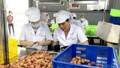 Hải Dương xuất khẩu lô vải thiều tươi đầu tiên sang Nhật Bản