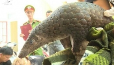 Việt Nam thu thập được sáu loại virus corona trên động vật hoang dã