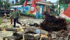 Chặt cây và hai tiếng 'trách nhiệm' trong học đường