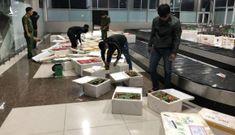 Dâu tây Trung Quốc chứa chất độc tuồn vào Đà Lạt