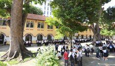 Chặt tỉa cây xanh tốn 237 triệu, trường học ở TP.HCM 'sốc'