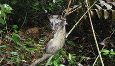 Loại bẫy đơn giản đang huỷ diệt các khu rừng Việt Nam