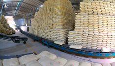 Giá gạo Việt xuất khẩu cao nhất thế giới