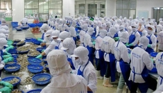 Việt Nam xuất khẩu lô tôm đầu tiên hưởng ưu đãi thuế theo EVFTA sang Hà Lan