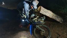 Lâm Đồng mật phục bắt quả tang hai đối tượng phá rừng và vận chuyển gỗ trái phép