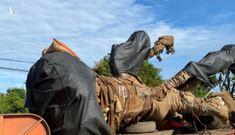 Cây khủng vượt hơn 300km, đến Đắk Nông mới bị phát hiện
