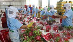 Xuất khẩu nông, thủy sản sang EU: Chất lượng là yếu tố sống còn