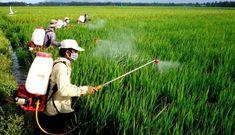 Cục Trồng trọt, chuyên gia phản ứng ý kiến '90% người Việt dùng gạo 'bẩn'