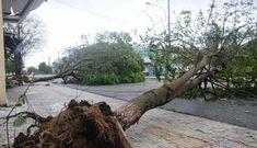 Sau bão số 9, đường phố Đà Nẵng, Quảng Nam thiệt hại nặng nề